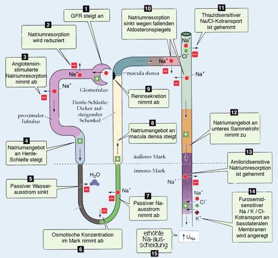Boron Physiology Pdf