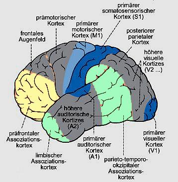 Praefrontaler Kortex